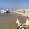 Blanco Brothers Horseback riding.webp