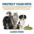 Nationwide Pet Inurance.webp