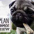 Petplan Pet Insurance - Rental Insurance