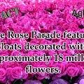 Rose Parade - Tournament Of Roses parade