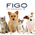 FIGO Pet Insurance - Car insurance.webp