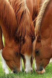 equine horse large.jpg