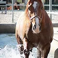 San Luis Rey Equine.webp
