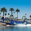 San Diego Seal Boat Tour Ride.webp