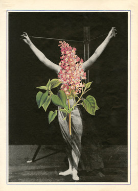 Hydrangea Paniculata smaller.jpg