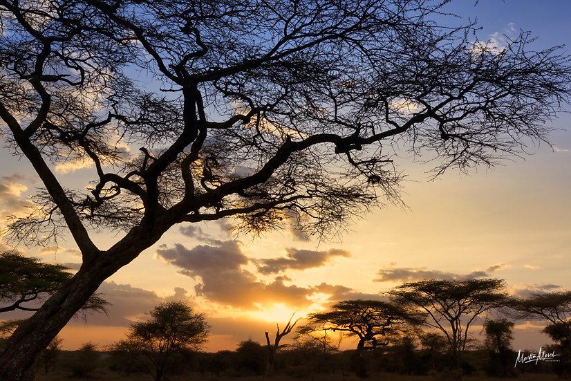 Crépuscule Tanzanien