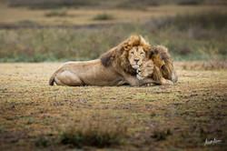 photo-deco-lions