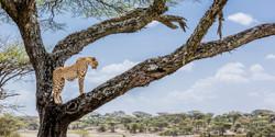 guepard et observatoire