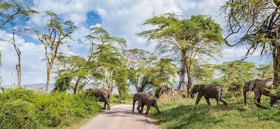 Balade Elephantesque