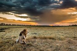 Lion et son royaume