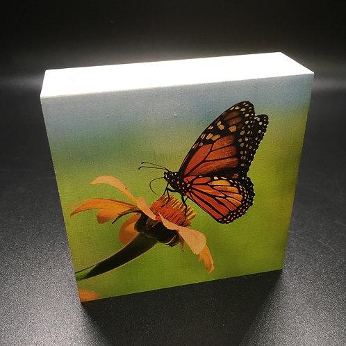 Butterfly on Flower Photo Art Block
