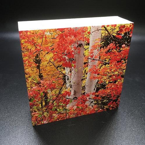 Fall Maple Leaves & Birch Trees Art Block