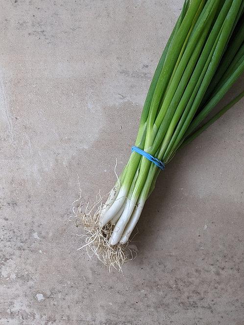 Spring Onions Organic