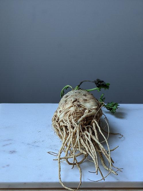 Celeriac - Flourish 1pc (c. 500g)