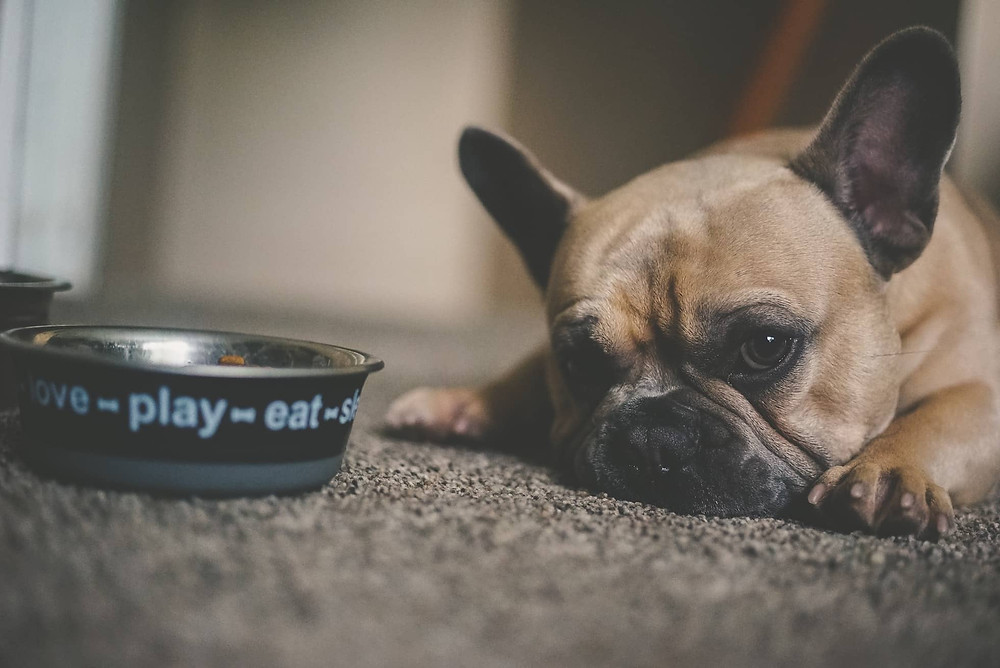 the best type of food water bowl for your dog