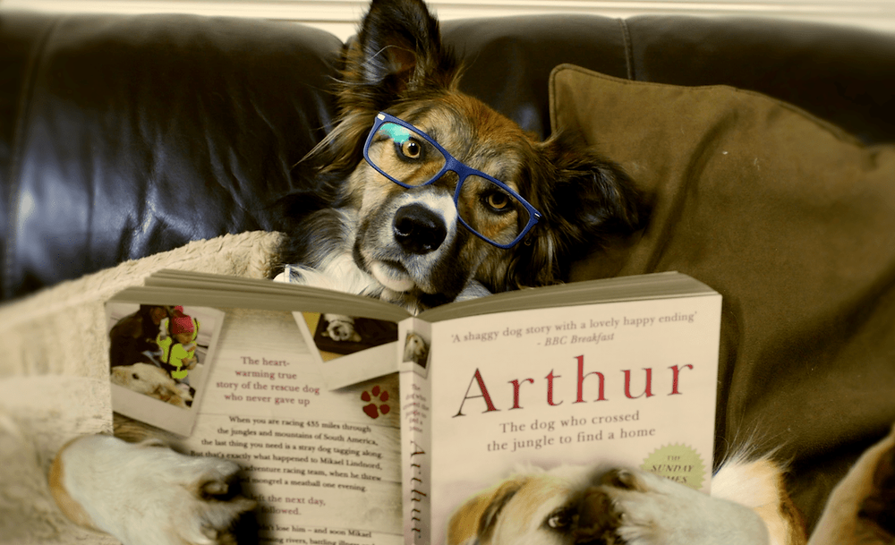 top books about dogs mind training understanding your dog