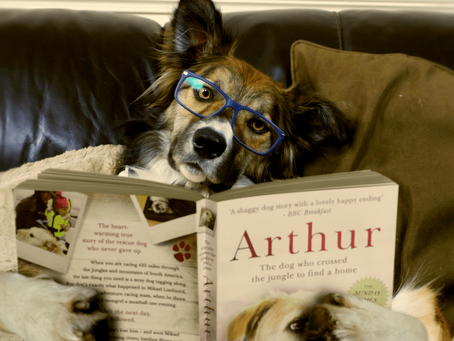 Our top five books about dogs