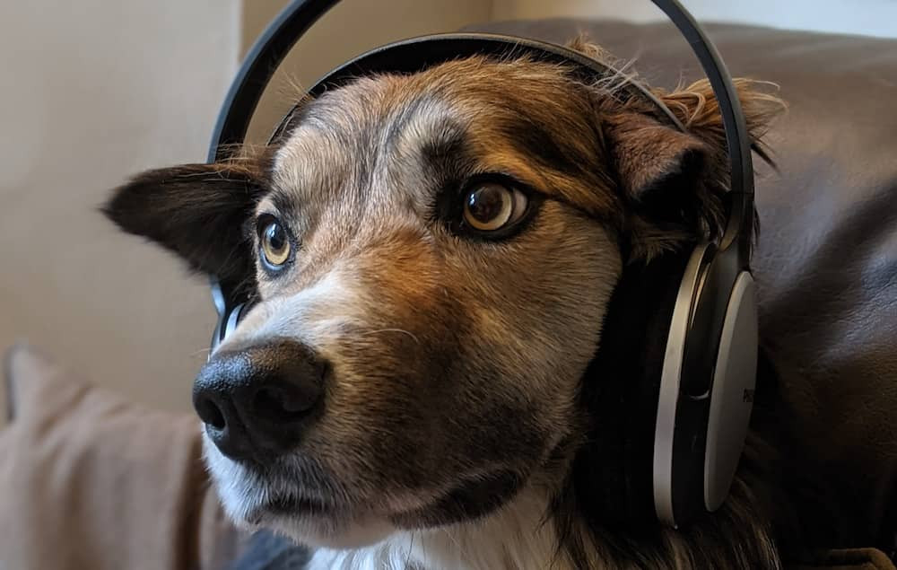 top five audiobooks for dog walking