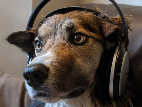 Five Audiobooks for Dog Walking