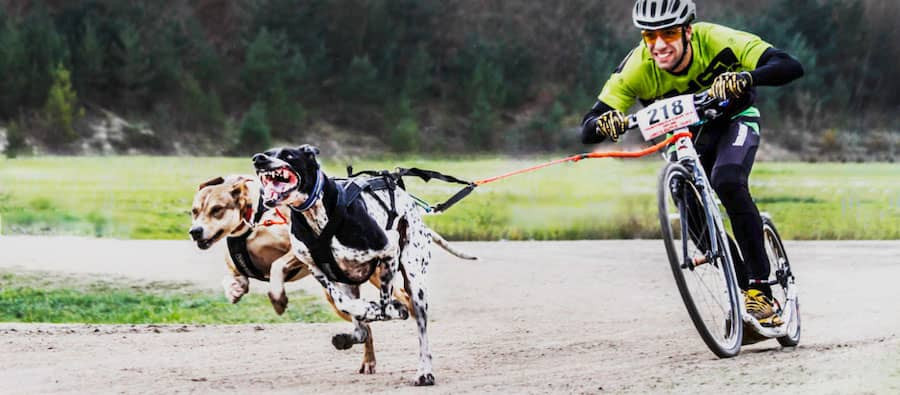 dog scootering active dog sports