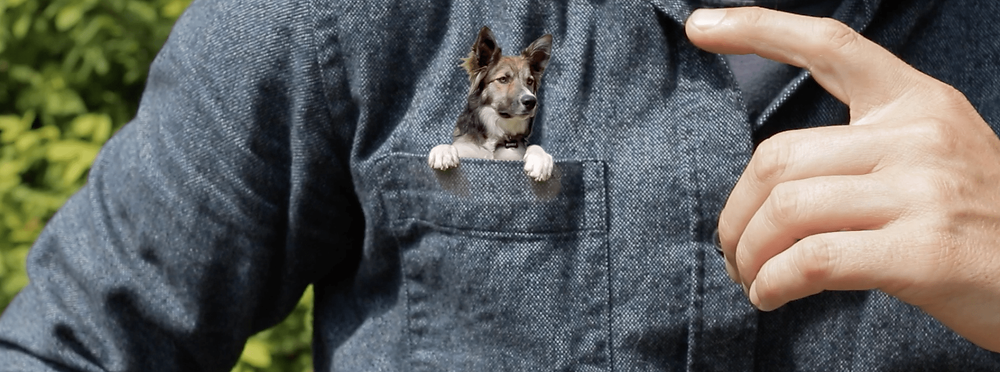 dog bags and carriers to transport your dog on the subway in public