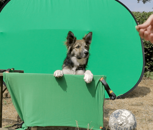 dog training for our funny dog videos
