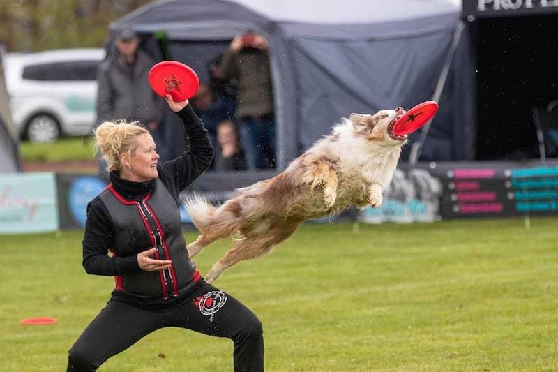 freestyle disc dog active dog sports