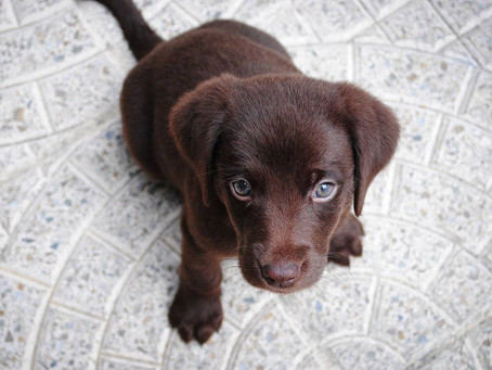 Five essentials for new puppy owners