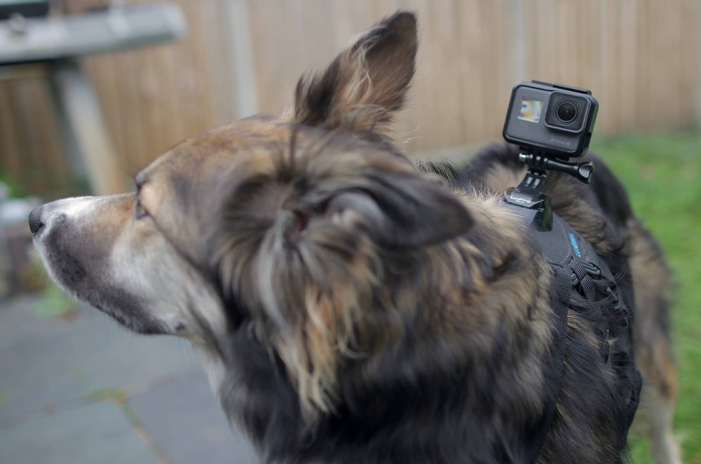 Top tech for dogs