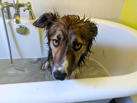 Best wet, muddy dog winter cleaning kit!