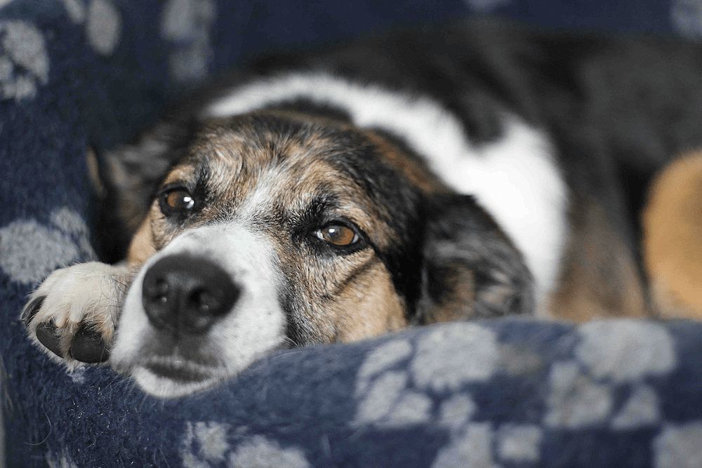 best products and accessories for old dogs
