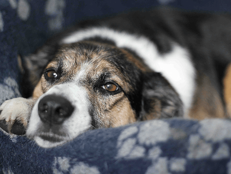 Best products and gear for old dogs