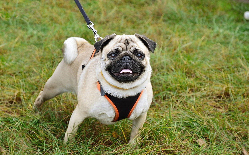 what is the best leash lead for my dog?