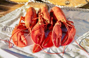maine sailing fresh lobster.jpg