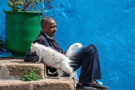 Windi Cat.jpg