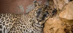 BeerSheva Zoo-Sept2014-22.jpg