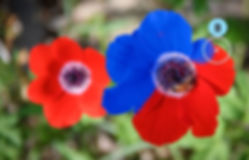 Replace Flower Color.jpg