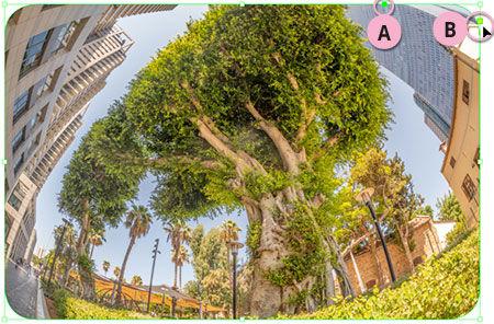 Round Cornered Photo.jpg
