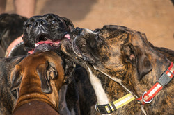Boxers Party May2014-4.jpg