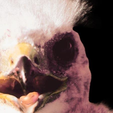 04-Chick.jpg