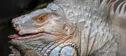 BeerSheva Zoo-Sept2014-41.jpg