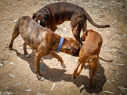 Boxers Party-31.jpg