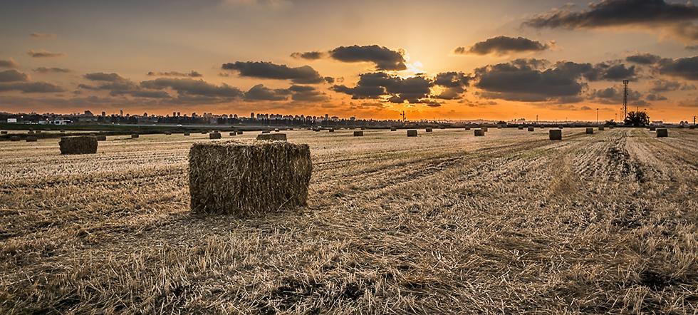 Einat Fields-6.jpg