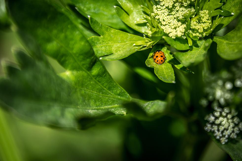 A Beetle in our Garden-1.jpg