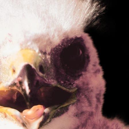 03-Chick.jpg