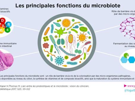 La flore intestinale responsable de notre poids?