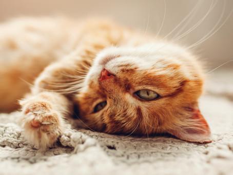 Exercices pour se relaxer et libérez les tensions nerveuses