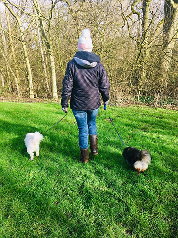 mel walking dogs.jpg