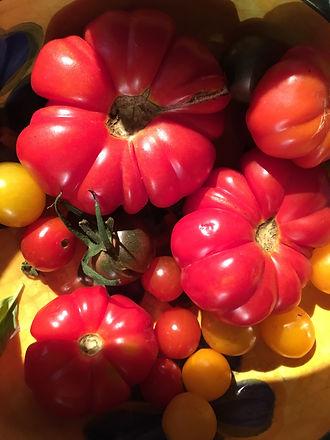 TomatoesIMG_5255.jpg