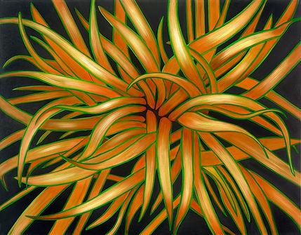 Tricolour Flax